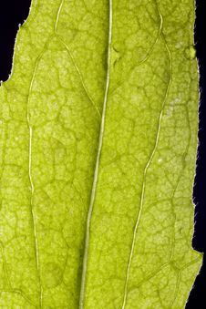 Free Leaf Stock Photography - 5703552