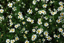 Free Many Flowers Stock Photo - 5703620