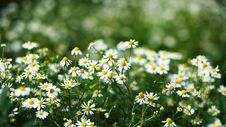 Free Small Flowers Royalty Free Stock Photography - 5703877