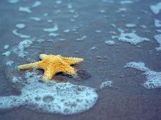 Free Starfish Royalty Free Stock Image - 5704166