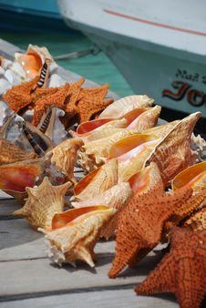 Free Seashells On Dock Stock Images - 5704674