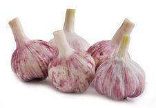 Free Garlic Group Stock Image - 5706891