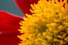 Free Macro Flower Royalty Free Stock Images - 5707149