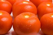 Free Tomatoes Stock Photo - 5707650