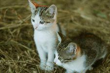 Free Mammals Stock Photography - 5707732