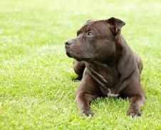 Free Dog Royalty Free Stock Images - 5708029