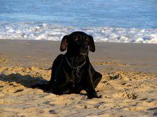 Free Black Dog Stock Photos - 5708413