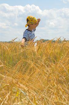 Free Happy In Golden Harvest Stock Photo - 5708750