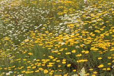 Blossoming Summer Meadow Stock Photos