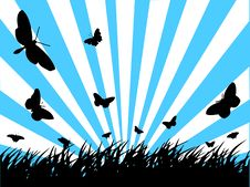 Butterfly Silhouette Stock Image