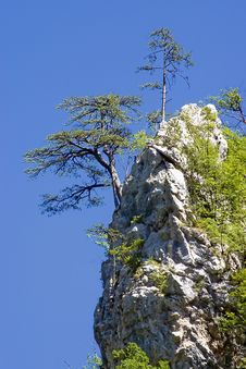 Free Tree On The Rock Stock Photos - 5709263