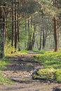 Free Forest Stock Image - 5714121