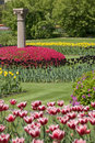 Free Flowerbed Of Tulips Stock Image - 5718941