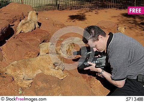 Free Lion Camera Royalty Free Stock Photos - 5713488