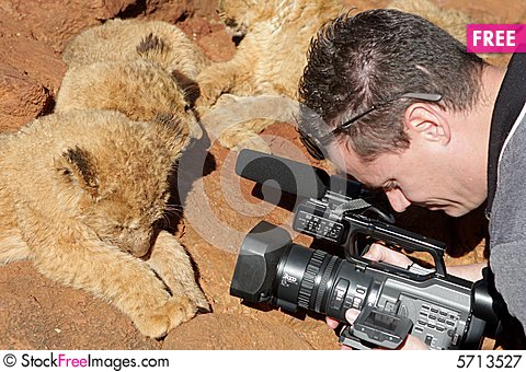 Free Lion Camera Royalty Free Stock Photography - 5713527