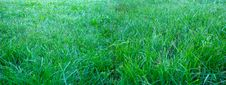 Free Wide Field Of Grass Royalty Free Stock Image - 5710146
