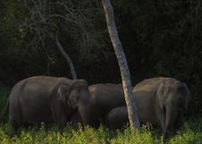 Free Elephants Stock Photography - 5710202