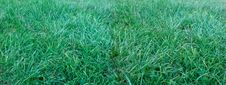 Free Wide Field Of Grass Stock Photo - 5710330