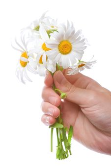 Free Bouquet Of Daisies In Women Hand Royalty Free Stock Photos - 5710938