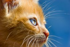 Free Red Kitten Stock Images - 5711044