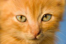 Free Red Kitten Stock Image - 5711051