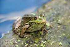 Free Frog Stock Images - 5711144