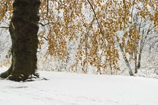 Free Winter Tree Stock Image - 5711191