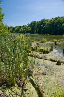 Free River Stock Photos - 5711333