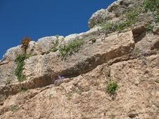 Free Delphi, Greece - Ancient Walls And Wildflowers Royalty Free Stock Photography - 5711347