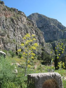 Delphi, Greece - Ancient Ruins & Mountain Flowers Royalty Free Stock Image