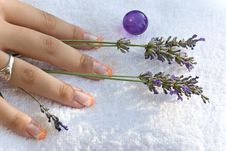 Free Women Hand With Lavender On Th Stock Images - 5711384