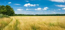 Free Summer Landscape Stock Image - 5711541