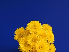 Free Bouquet Of Yellow Flowers Royalty Free Stock Photo - 5712565