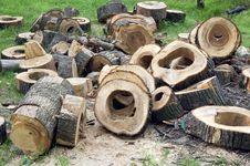 Free Stumps Royalty Free Stock Photos - 5712658
