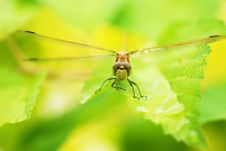 Free Dragonfly Stock Photography - 5713462