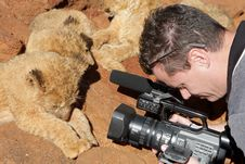 Lion Camera Royalty Free Stock Photography