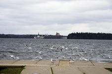 Free Seagull Stock Photos - 5713823