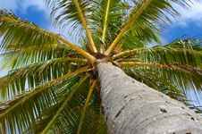 Free Palm Tree Royalty Free Stock Images - 5714089