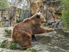 Free Brown Bear Royalty Free Stock Image - 5714326