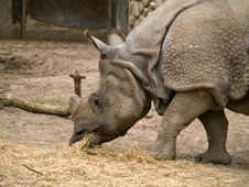 Free Rhinoceros Royalty Free Stock Image - 5714356