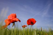 Free FIELD OF POPPIES Stock Photo - 5714660