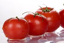 Free Tomatoes Stock Images - 5714794