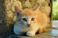 A Ginger Kitten Royalty Free Stock Photography