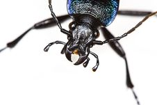 Free Beetle Portrait Royalty Free Stock Image - 5715106