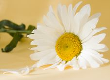 Free Flower Royalty Free Stock Photography - 5715427