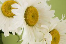 Free Flower Royalty Free Stock Image - 5715496