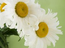 Free Flower Stock Images - 5715694