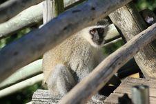 Free Monkey Stock Photos - 5715773