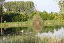 Free Swan Swimming On Lake Royalty Free Stock Photos - 5715968