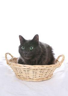 Free Black Cat In Wicker Basket Stock Photo - 5716740